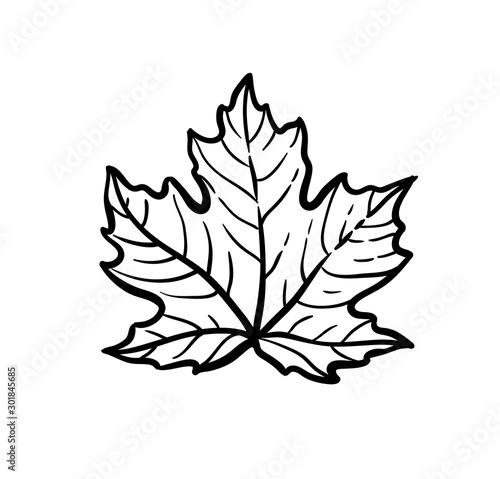 Fototapeta Ink sketch of maple leaf.