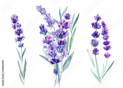 Photo set of lavender flowers, bouquet of lavender flowers on an isolated white backgr