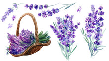 Set Of Elements Of Lavender Flowers On An Isolated White Background, A Basket With Lavender, Bouquet, Watercolor Illustration, Hand Drawing