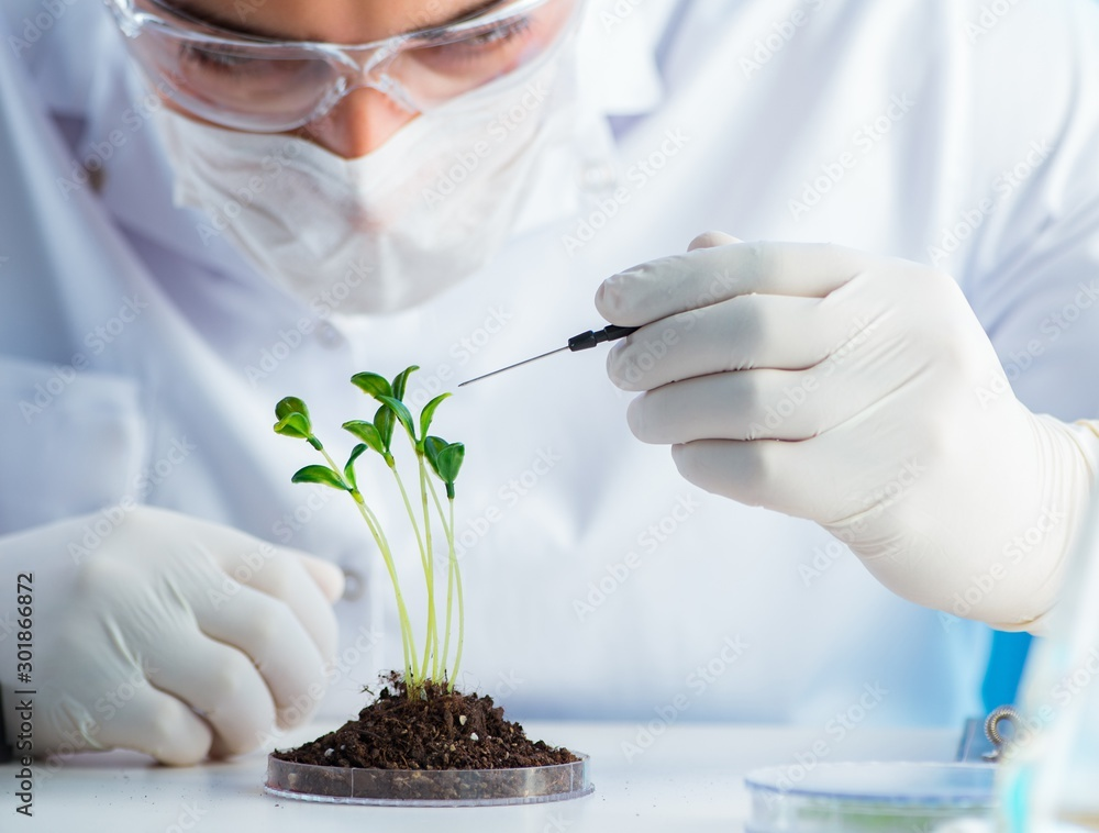 Fototapety, obrazy: Biotechnology concept with scientist in lab