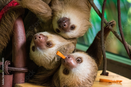 Photo  Costa Rica sloths