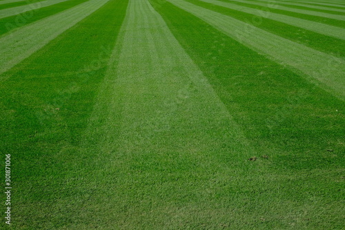 Aluminium Prints Green 緑が美しい芝生