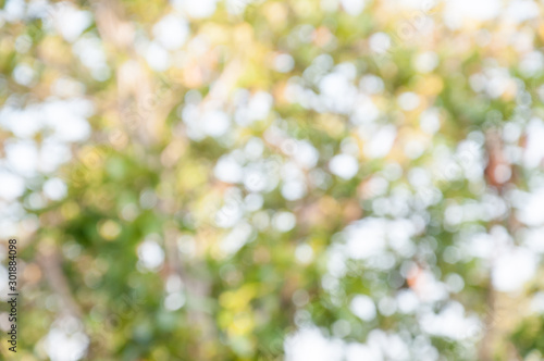 Fototapety, obrazy: Natural outdoors bokeh in green and yellow tones