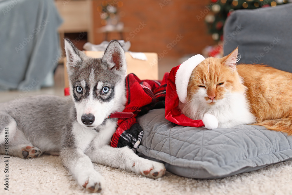 Fototapeta Cute cat with dog at home on Christmas eve