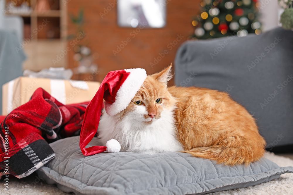 Fototapety, obrazy: Cute cat in Santa Claus hat at home