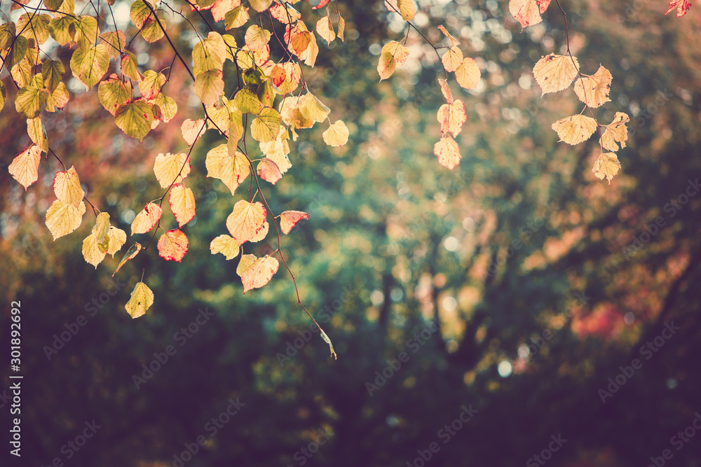 Fototapety, obrazy: Autumn color in Hyde Park UK