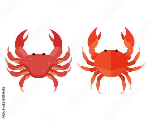 Photo Red crab vector