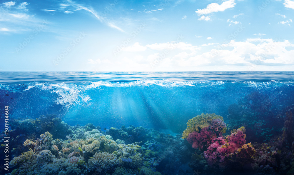 Fototapeta background of beautiful coral reef with marine tropical fish visited here