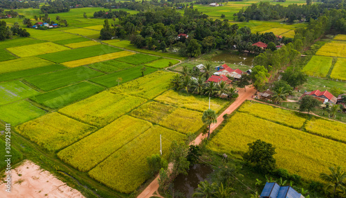 Montage in der Fensternische Honig A ricefield and landscape near the city of Takeo in Cambodia