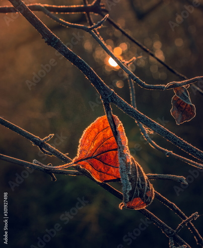 Fading nature in autumn plants Fototapeta