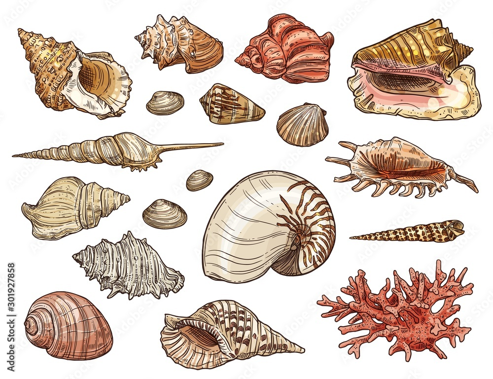 Fototapety, obrazy: Seashells of snail, clam, shellfish and conch