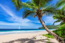 Sandy Beach With Coconut Palm ...