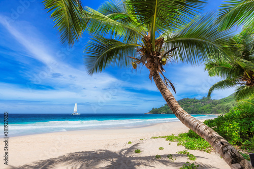 Obrazy rośliny  sandy-beach-with-coconut-palm-trees-and-a-sailing-boat-in-the-turquoise-sea-on-paradise-is