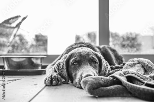 Fotografie, Tablou  Tired Bessie