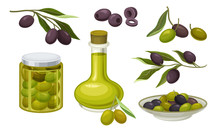 Green And Black Olives Healthy Products Vector Set