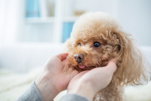 LWTWL0020336 Woman And Cute Dog