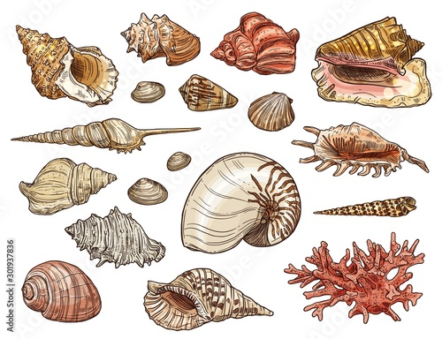 Leinwand Poster Seashells of snail, clam, shellfish and conch
