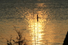 Sunset Over The Lake With Catt...