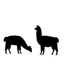 Silhouette Of Two Alpaca Llamas. Alpaca Llama Family.