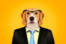 Portrait Of A Beagle In A Busi...