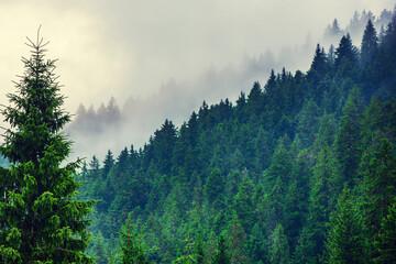 FototapetaMisty mountain landscape
