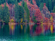 Reflection Of Autumn Foliage Along The Shore Of Lake Tovel, Trentino Alto Adige