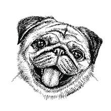 Sketch Dog. Cute Pug. Portrait...