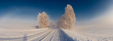 Fototapeta Fototapety na ścianę - Panoramic view of a snowy road with trees. Christmas mood
