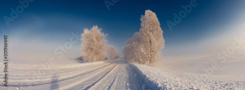 Foto auf AluDibond Blaue Nacht Panoramic view of a snowy road with trees. Christmas mood