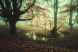 fairy tale forest with fog and a river