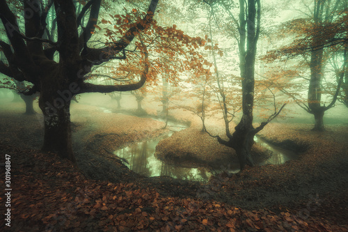 Fotografie, Obraz  fairy tale forest with fog and a river