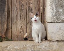Funny Calico Cat Looking With An Amazed Facial Expression, Sitting In Front Of An Old Wooden Door, Greece