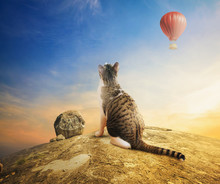 Fluffy Spotted Cat Looks At The Aerostat Balloon In The Sky Sitting On A Rock. Serenity In Nature, Blue Sky, Rocks And A Spotted Cat. Thinking About The Beauty Of Nature