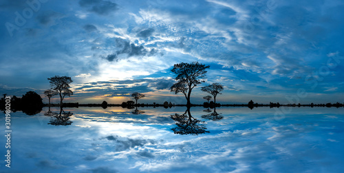 Fond de hotte en verre imprimé Bleu jean Panorama silhouette tree in africa with sunset.Tree silhouetted against a setting sun reflection on water.Typical african cool light sunset with acacia trees in Masai Mara, Kenya.