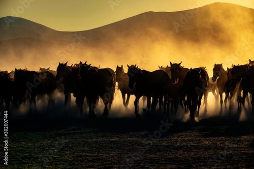 Cuadros en Lienzo  Wild horses living in nature