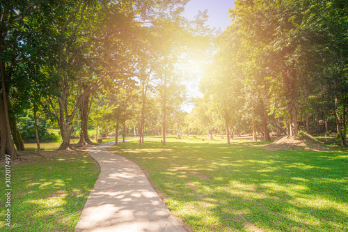 Fototapeta New pathway and beautiful trees track for running or walking and cycling relax in the park on green grass field on the side of the golf course. Sunlight and flare background concept. obraz