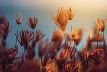Beautiful Blooming Grass Wild Flowers Fields In Summertime With Natural Sunlight And Sunset In The Blue Sea