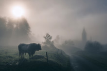 Misty Morning Countryside