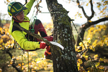 Arborist Man Cutting A Branche...