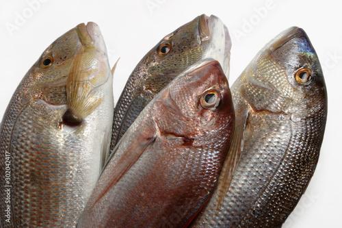Fotomural Pesce