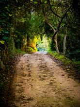 Camino Iluminado Hacia Un Túnel De Bosque Frondoso