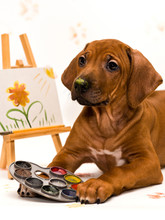 Puppy Artist Painting Picture, Holding Paint Pallette By Paws