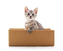 Little Cat In The Box.