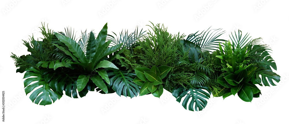 Fototapety, obrazy: Green leaves of tropical plants bush (Monstera, palm, rubber plant, pine, bird's nest fern) floral arrangement indoors garden nature backdrop isolated on white background, clipping path included.