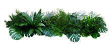 Green Leaves Of Tropical Plant...