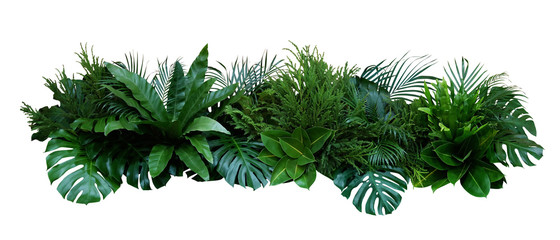 Green leaves of tropical plants bush (Monstera, palm, rubber plant, pine, bir...