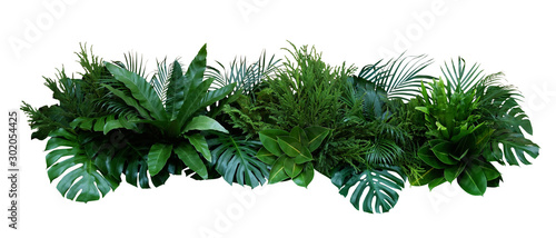 Green leaves of tropical plants bush (Monstera, palm, rubber plant, pine, bird's nest fern) floral arrangement indoors garden nature backdrop isolated on white background, clipping path included. #302054425