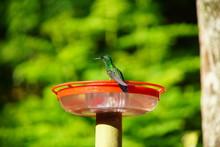 Hummingbird In Nature On Feeder