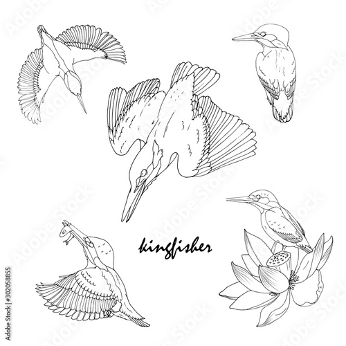 Canvas-taulu Kingfisher bird in different poses, black and white vector illustration
