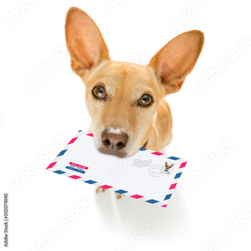 Papiers peints Chien de Crazy dog mail deliver postal post man